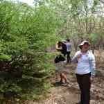 Guayacan real Plantation