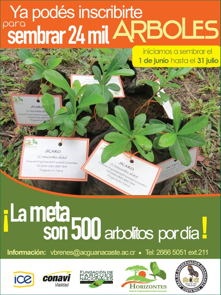 poster for tree planting activities