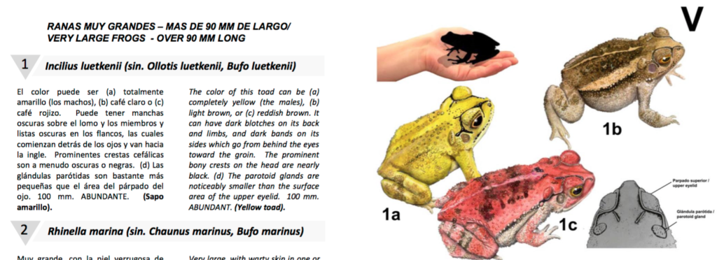 Toads from norman's here guide